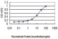 Anti-DAZ1 Mouse monoclonal antibody [clone: 3G10]