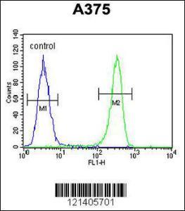 Anti-DSC1 Rabbit Polyclonal Antibody