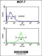 Anti-DIO2 Rabbit Polyclonal Antibody (PE (Phycoerythrin))