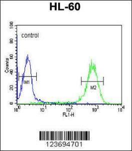 Anti-DLK2 Rabbit Polyclonal Antibody (HRP (Horseradish Peroxidase))