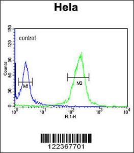 Anti-CLIP1 Rabbit Polyclonal Antibody (PE (Phycoerythrin))