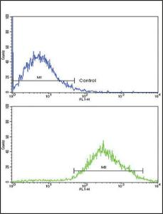 Anti-DDR2 Rabbit polyclonal antibody