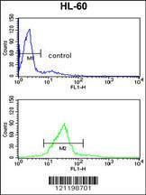 Anti-CBFB Rabbit Polyclonal Antibody (FITC (Fluorescein))
