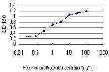 Anti-CRIM1 Mouse monoclonal antibody [clone: 6E4]