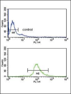 Anti-DCT Rabbit Polyclonal Antibody (PE (Phycoerythrin))